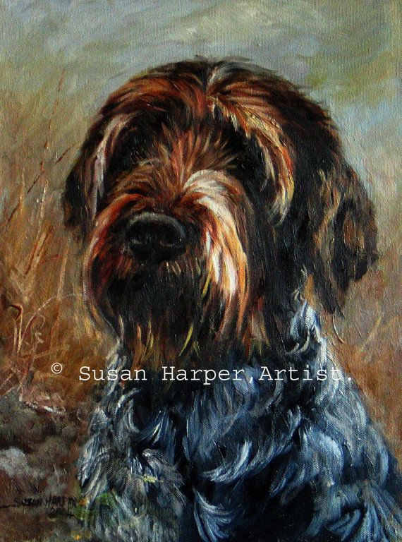 German Wirehaired Pointer 1 Fine art dog print by ...