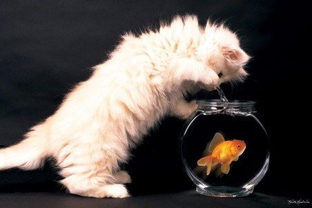 Happy Fishing - Cat and Goldfish - By Keith Kimberlin