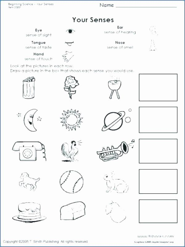 Five Senses Worksheets For Kindergarten Free Kindergarten Science Worksheets Sen In 2020 Kindergarten Worksheets Kindergarten Worksheets Printable Preschool Worksheets