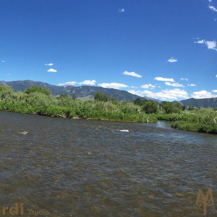 69 best madison river fly fishing images on pinterest for Madison river fly fishing