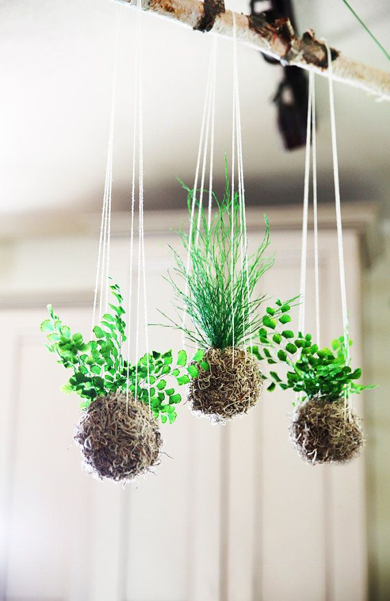 Set of 3- Tan Spanish Moss Ball. Hanging Kokedama String Garden. Care Free, Real Preserved Plants.
