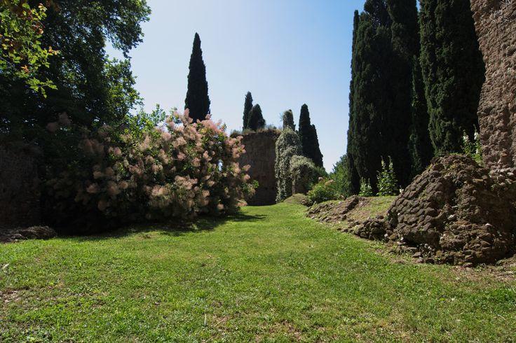 https://upload.wikimedia.org/wikipedia/commons/e/e3/Giardino_di_ninfa_-_chiesa_di_Santa_Maria_Maggiore_-_Abside_ed_albero_della_nebbia_(sulla_sinistra).jpg