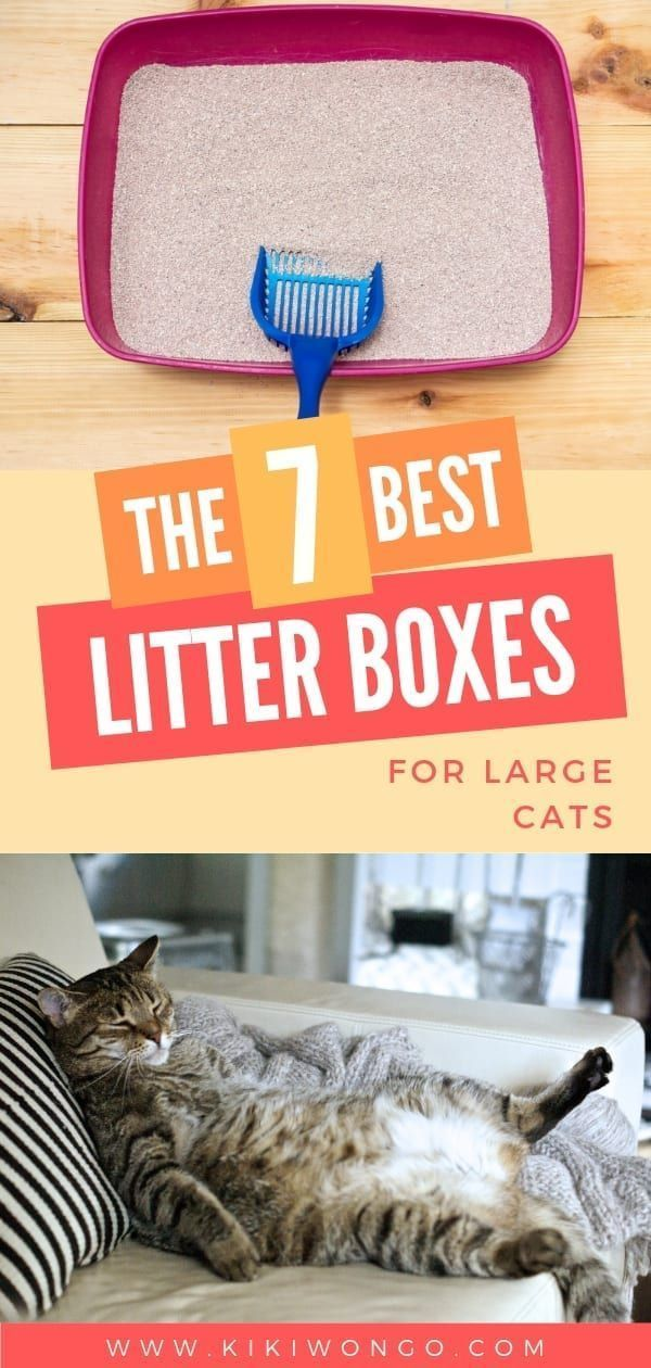 The 7 Best Litter Boxes For Large Cats If You Are The Proud Owner