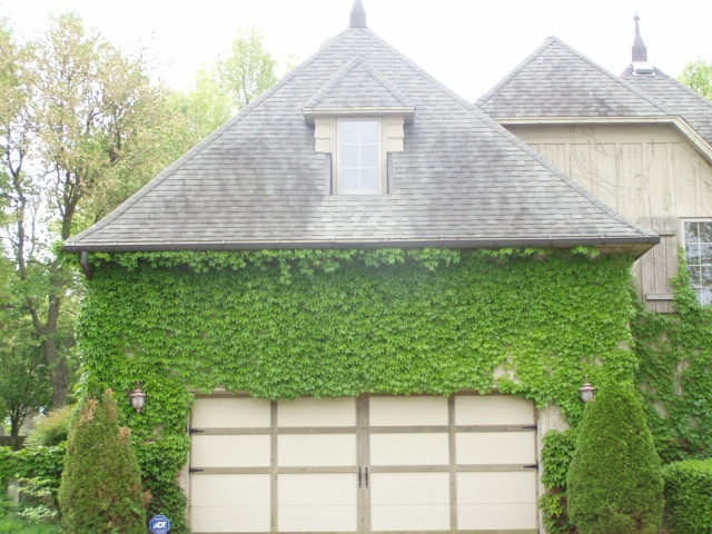 Boston ivy covering garage. Might be a good way to make our stark garage seem & 10 best Decorating Garage images on Pinterest | Flowers garden ... pezcame.com