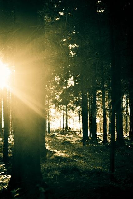 Sun by Danniel Ababei, via Flickr
