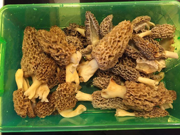 April 15th stockton mo stuffed mushrooms food vegetables
