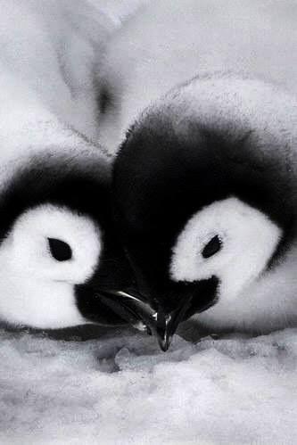.Penguins