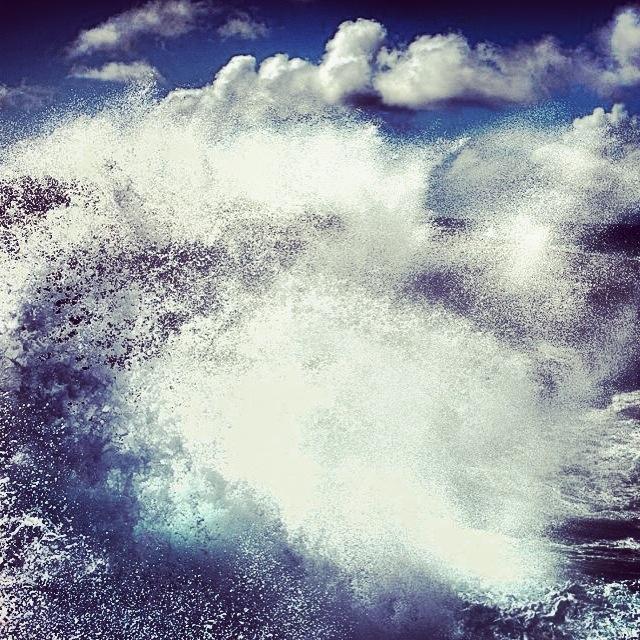 Wilde zee at boca
