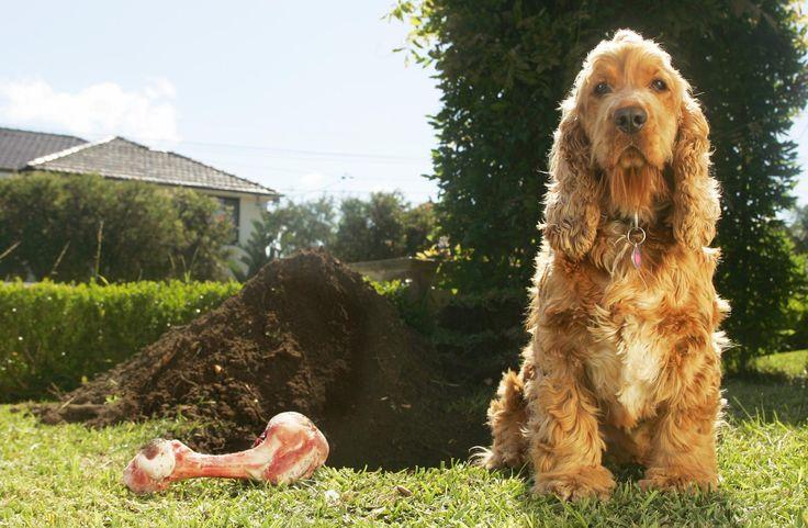 Why Do Dogs Bury Bones? | LoveToKnow | House training dogs ...