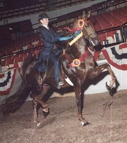 riding horses: Beats Win, Walker My Favorite, Hoof Beats, Fur Kids, Fun Things, Riding Horses, Tennessee Walker My