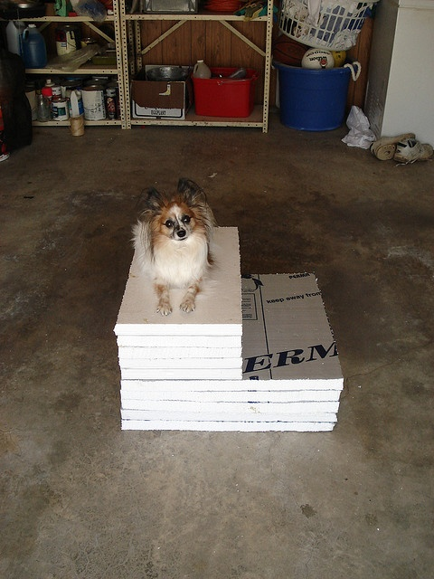 1000 Ideas About Dog Stairs On Pinterest Dog Ramp Dog