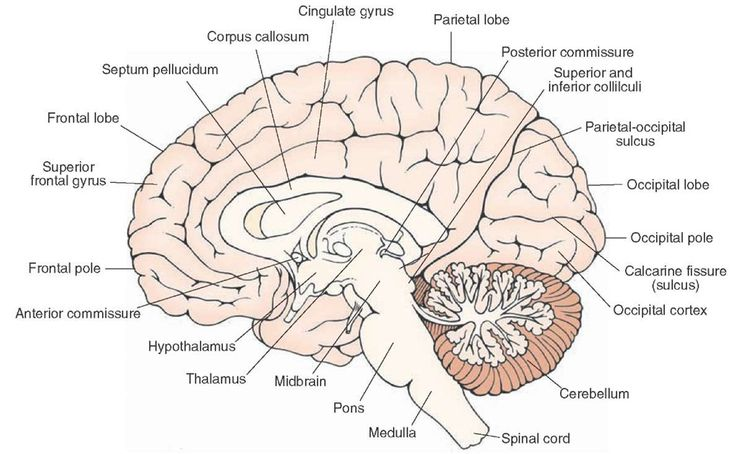 28 Best Brain Images On Pinterest Neurology Brain Parts And