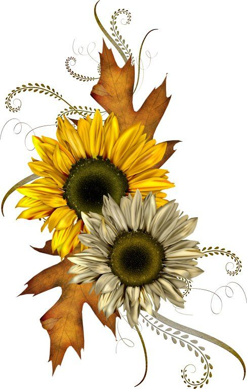 Best 25 Fall Clip Art Ideas On Pinterest