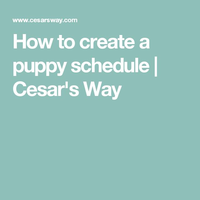 How to create a puppy schedule | Cesar's Way