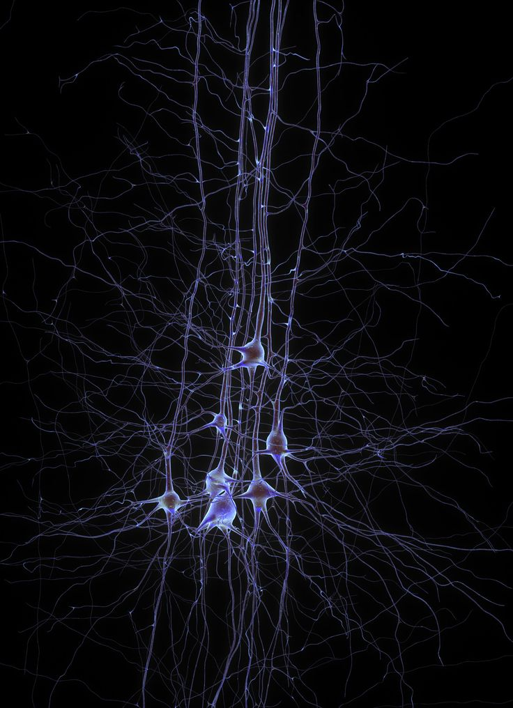 Human learning altered by electrical stimulation of dopamine neurons