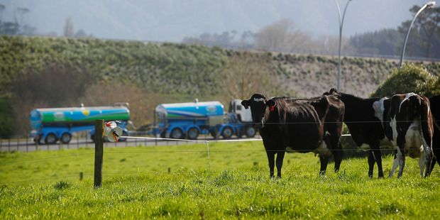 Waibury New Zealand Farm Investments Blog and News Updates