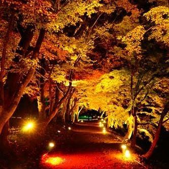 ライトアップされた紅葉に包まれた一本道 #紅葉 #ライトアップ #静寂 #誰も居ない #そうだ京都に行こう #followme #sonyalpha #α7 #japan_of_insta #bestjapanpics #special_post #japanigram #japan_photo_now #lovers_amazing_group #photo_travelers #写真好きな人と繋がりたい #写真撮ってる人と繋がりたい #カメラ好きな人と繋がりたい #写真好き #写真好きな人と繋がりたい #写真撮ってる人と繋がりたい #写真好き #lovers_nippon #bestjapanpics #special_post #Loves_nippon #japan_photo_now #art_of_japan #lovers_amazing_group #photo_jpn #pics_jp #jp_gallery #photo_travelers
