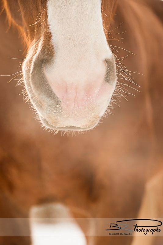 horse / soft little whiskers tickling my hand