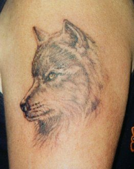 best 25 coyote tattoo ideas on pinterest coyote drawing desert tattoo and desert drawing. Black Bedroom Furniture Sets. Home Design Ideas