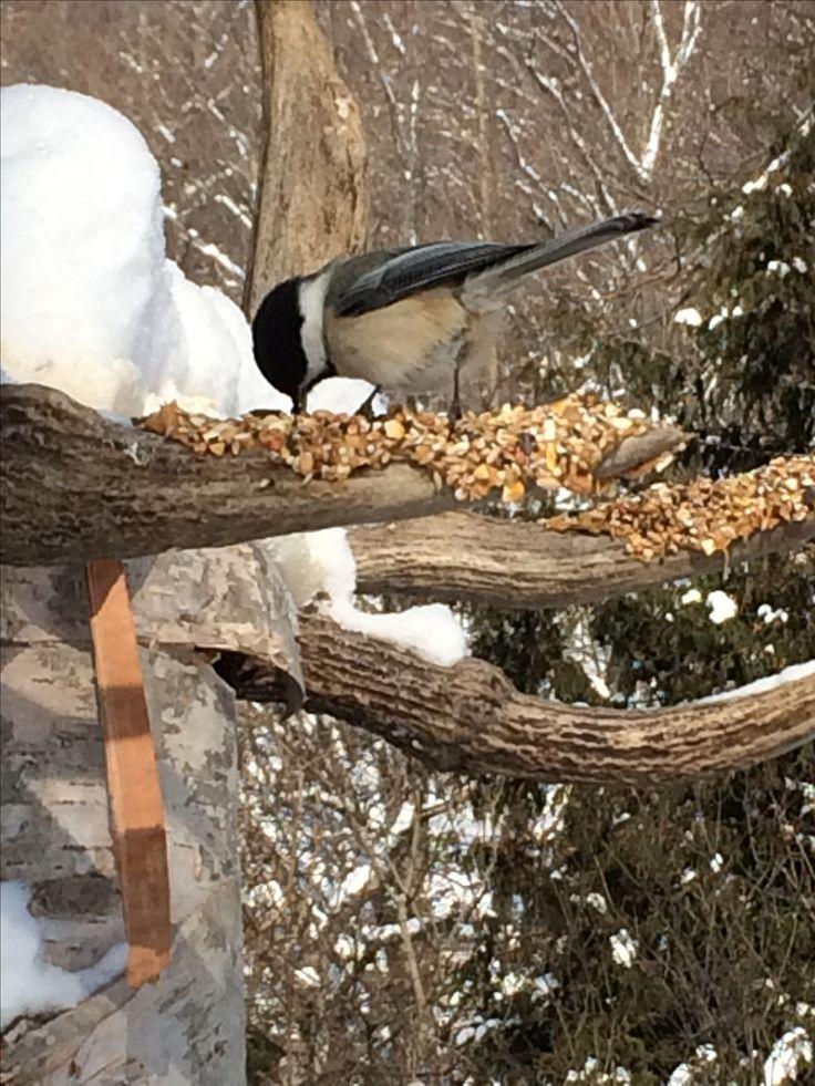 Antler bird feeder
