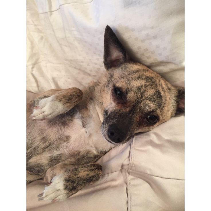 Lola in bed