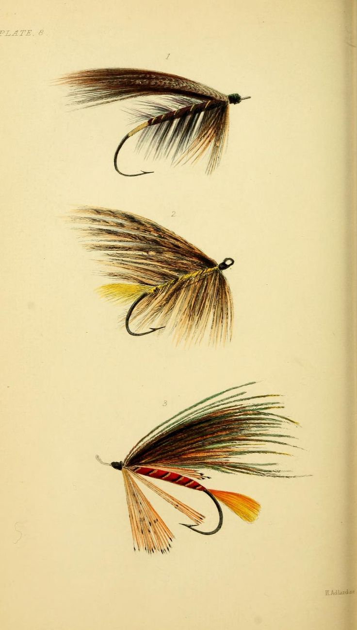Plate 8: Salmon Flies, Hewett Wheatley - The Rod and Line 1849