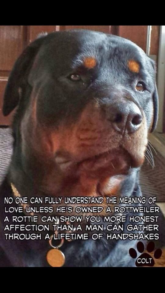 #Rottweiler quote