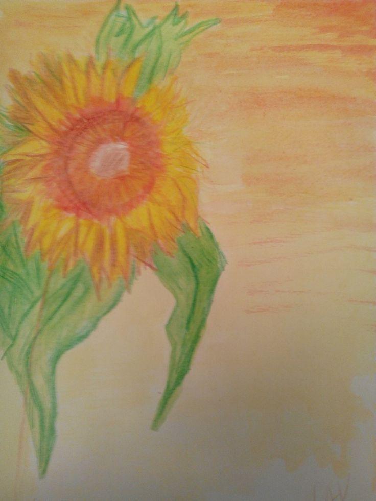 @lauraudiovisual Sunflower