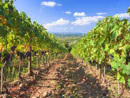 Tuscany Day Trip from Rome with Wine Tasting & Organic Farm Lunch