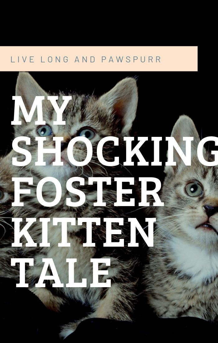 The Surprising Truth About My First Foster Kitten Foster Kittens The Fosters Newborn Kittens
