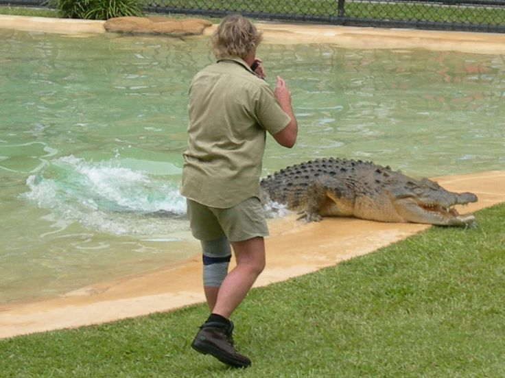 how to buy a steve irwin