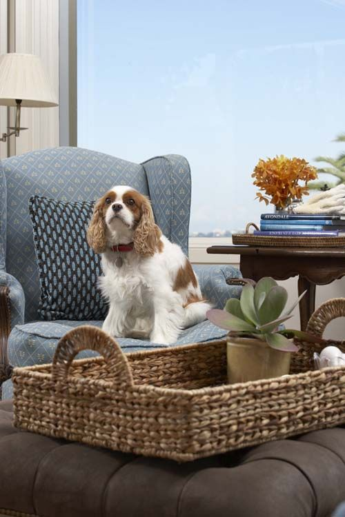Dogs and chairs just go together.