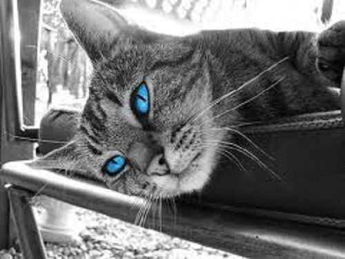 gray tabby cats with blue eyes | Lil Faces! | Pinterest