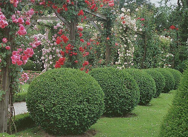 17 meilleures id es propos de topiaires de buis sur pinterest jardins formels planteurs de - Taille des buis ...