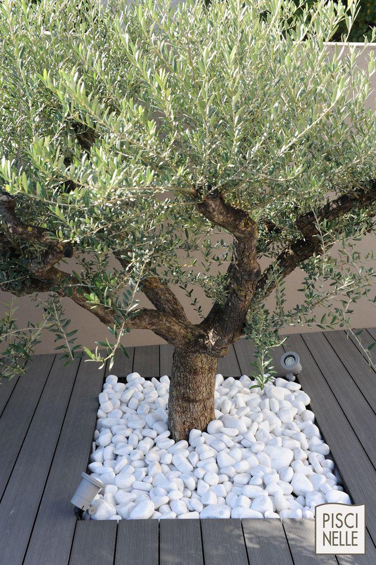 A Valence, un olivier entouré de galets blanc rappelle les charmes de la campagne environnante. Piscine urbaine en centre-ville de Valence | Piscinelle