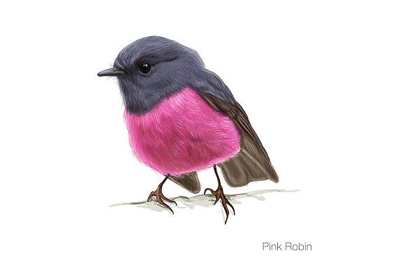 3184317 Pink robin hand drawn vector illustration  robin, winter, bird, scene, snow, christmas, cold, nature, fluffy, feeder, holiday, colorful, orange, animal, card, scenes, small, wild, branch, wildlife, cardinal, vector, illustration, birds, northern, cute, cartoon, isolated, design, toucan, flying, natural, woodpecker, watercolor, humming, tropical, exotic, hand, botanical, summer, drawing, silhouette, seagull, flock, wings, jungle, geography, asia, forest, hand drawing
