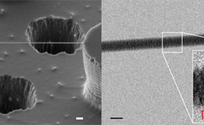 Consiguen primera imagen de ADN a través de un microscopio electrónico