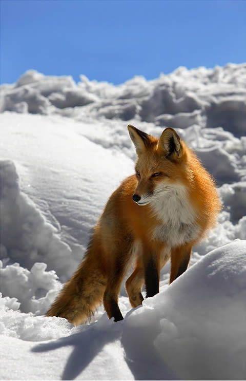 Imagenes De Paisajes Y Animales | Recopilación de animales salvajes disfrutando de la naturaleza.
