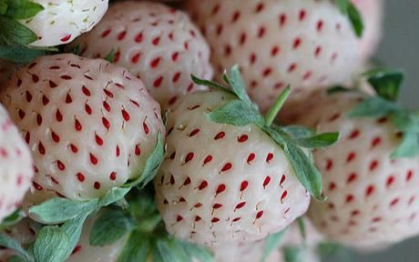 Pineberry...looks like white strawberry except it tastes like pineapple!