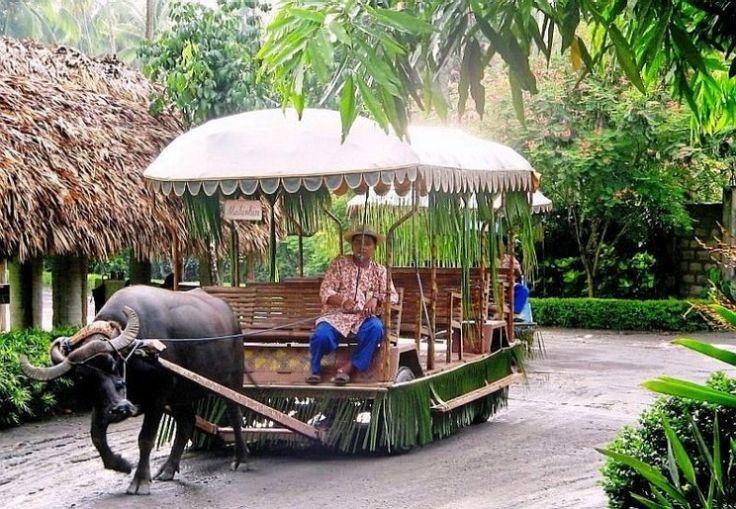 Carabao Caravan In Villa Escudero Resort Mabuhay