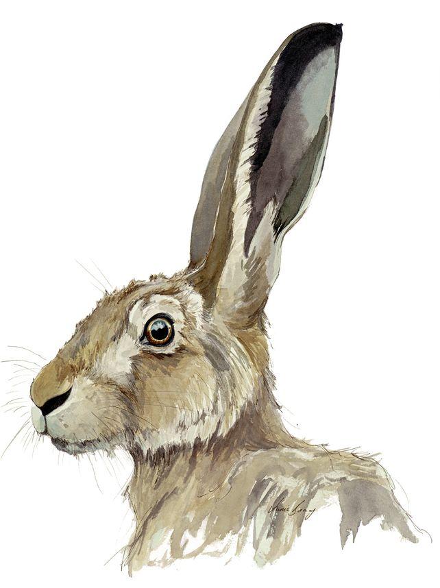 Hare Portrait VI £30.00