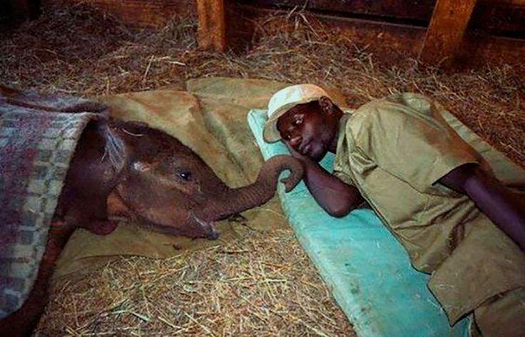 #InspiracionUdever | Estarás bien!, estaré contigo en todo momento. Elefante enfermo junto a su mejor amigo.
