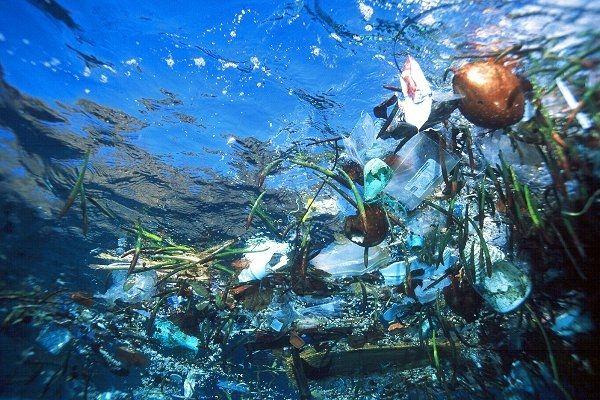 Úszó szemét / Floating garbage