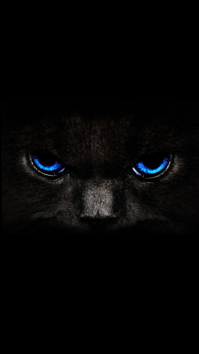 black cat iphone 5 wallpaper (Dengan gambar) Kucing