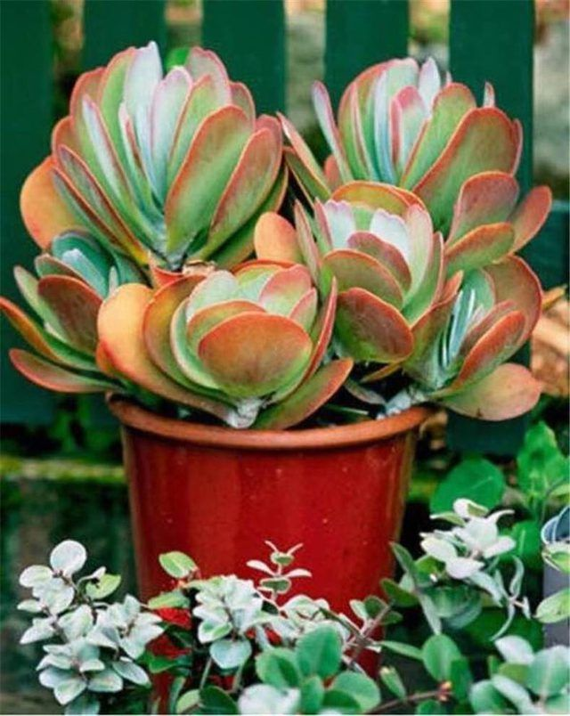 13 Desert Plants To Use When Landscaping Jardin De Plantes