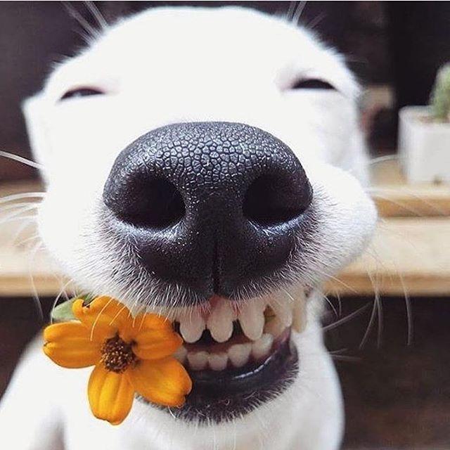 Vycaruje usmev aj tebe Whitedog  #dog #pes #eurosaurus #whitedog #whitedogsk #deka #blanket #animal #happy #stastie #radost #slovakia #stastnypes #slovensko #home #igeurope #europe #ig_slovakia #handmade Photo by @eurosaurus