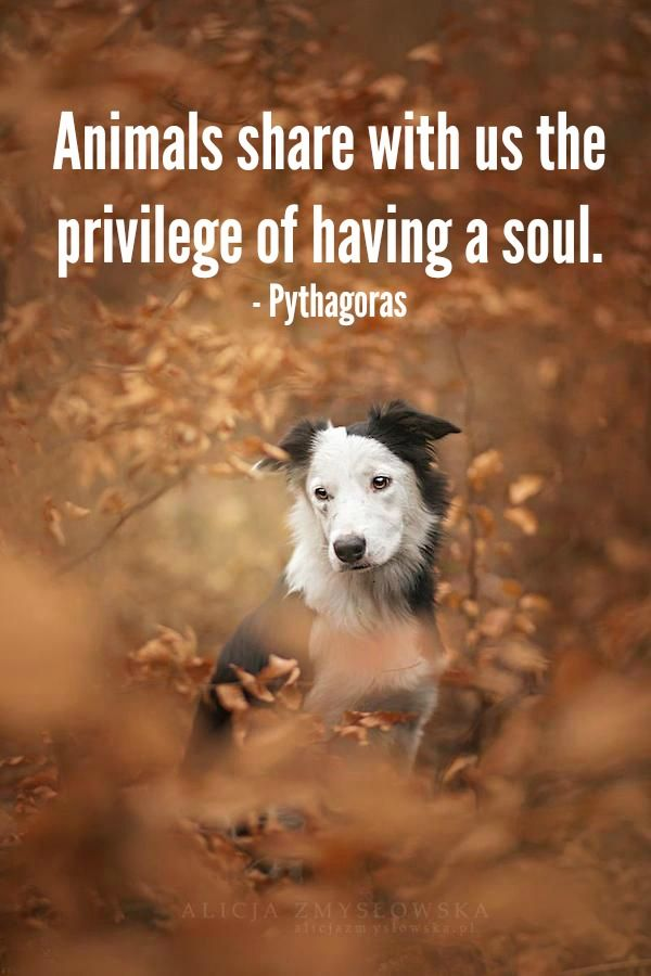 all animal lovers know that animals have a soul. www.hillsidevets.co.uk