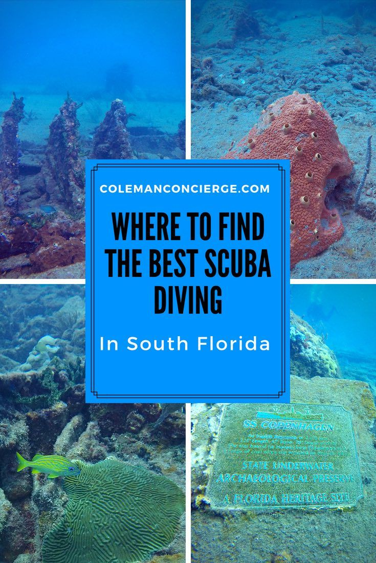 Some Of Florida S Most Breathtaking Scuba Diving And Snorkeling Spots Can Be Found Just Off The Coast Fort Lauderdale Pompano Beach