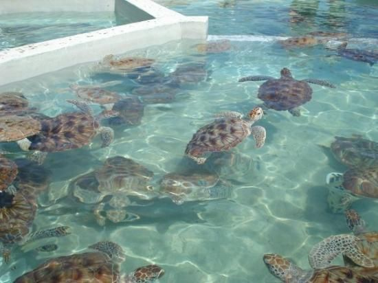 Grand Cayman Turtle Farm. Just went there and was neat to see. You should book it with the Dolphin Encounter across the street!