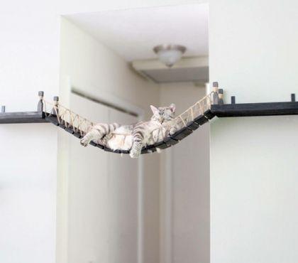 Katzen Hängebrücke selber bauen – Nützliche Tipps und 2 Bauanleitungen – Katzen